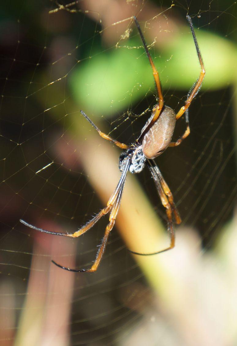 spider 17 April 1