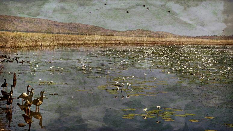 lagoon - Gritty 13